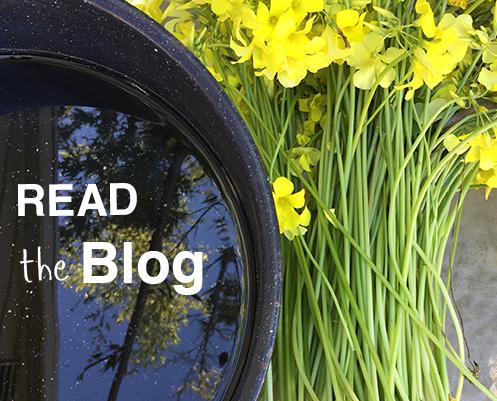 spring2017-theblog