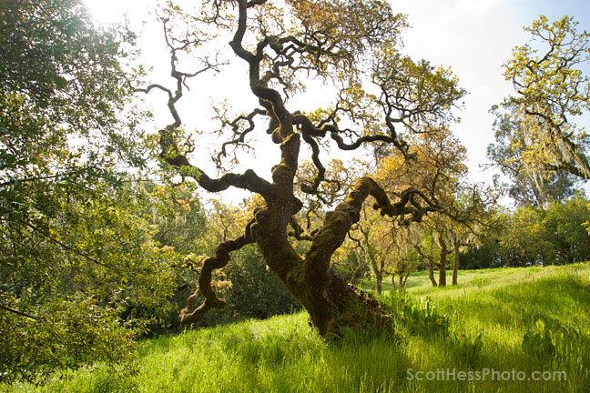 tree-26883_384244424597_945333_n.jpg
